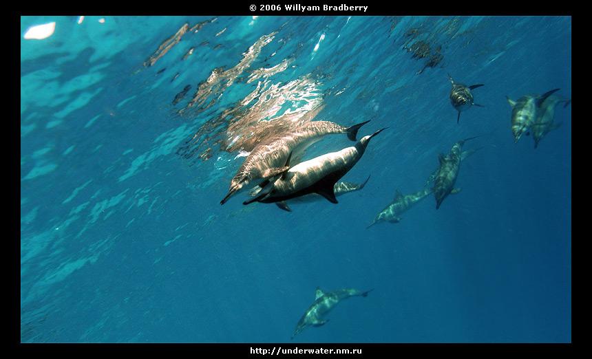 подводные фото дельфинов colored underwater photo of dolphins