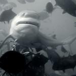 Акула под водой. Челюсти и зубы. Подводная фотосъемка.