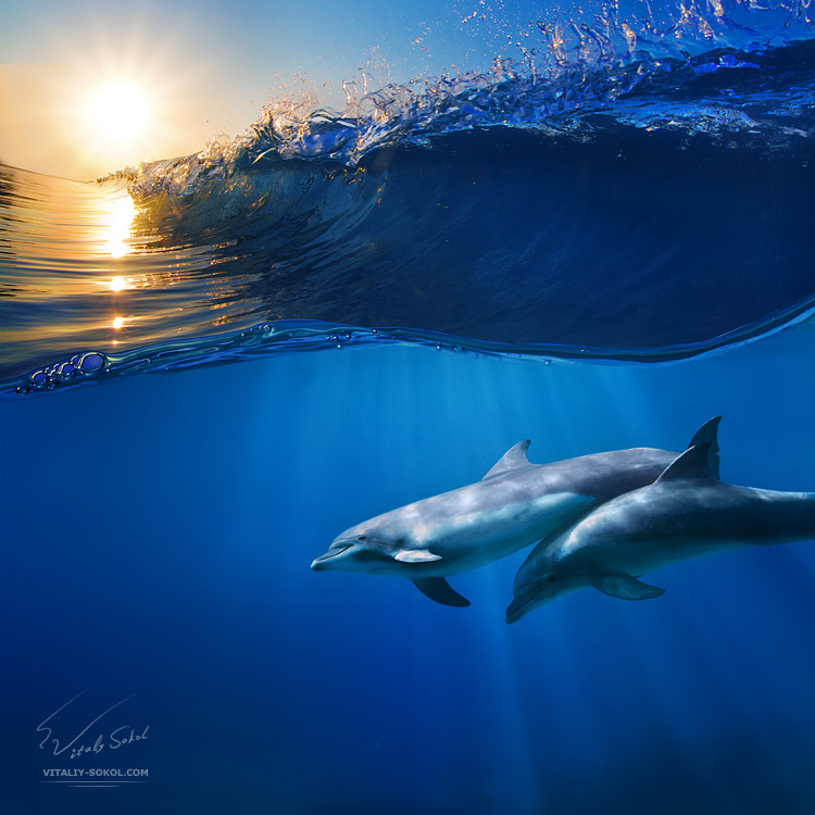 two-beautiful-dolphins-swimming-underwater-through-sunrays-with-breaking-wave-above-2