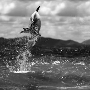 Dolphin leaping out from sea