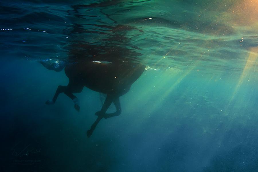 uw-horse-IMG_8421