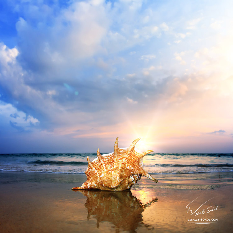 Tropical ocean paradise design postcard. A beach with seashell of lambis truncata giant mollusk on reflected wet sand near shorebreak waves