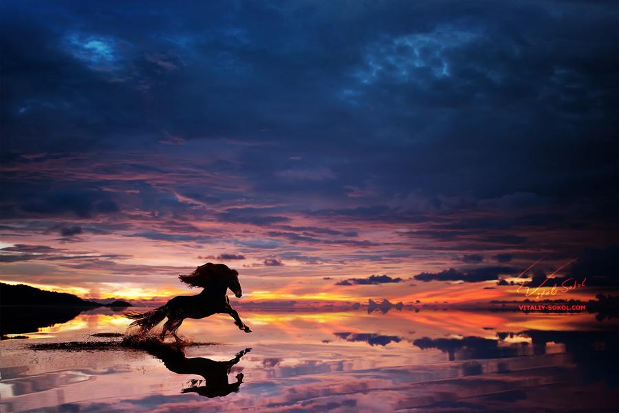 Beautiful-sunset-beach-with-Running-Horse-trough-water-design-template