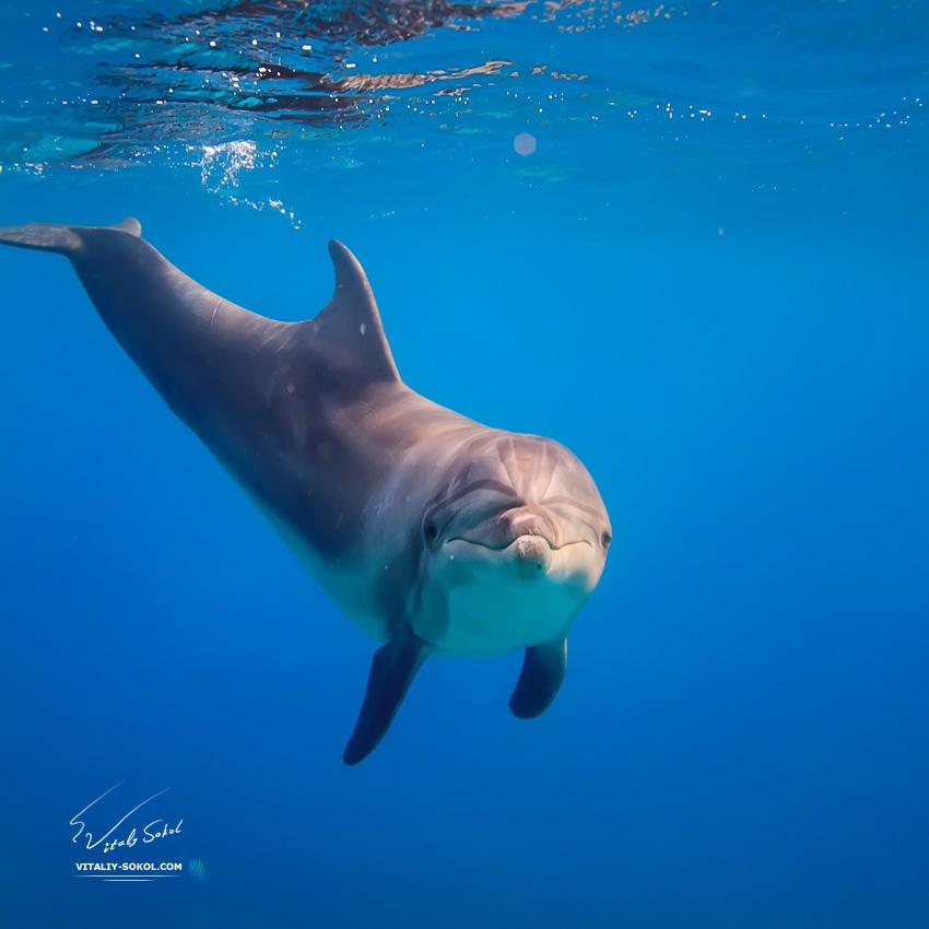 dolphin-IMG_0210
