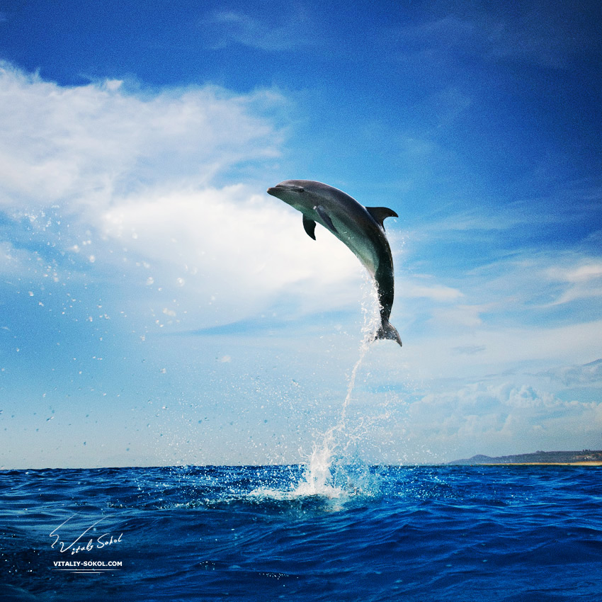 Dolphin bumping from sea