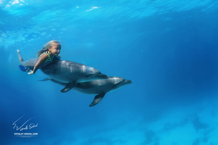 A little girl swimming with pair of dolphins underwater. An ocean life sports extreme design. Kid with marine animals. Red sea diving.
