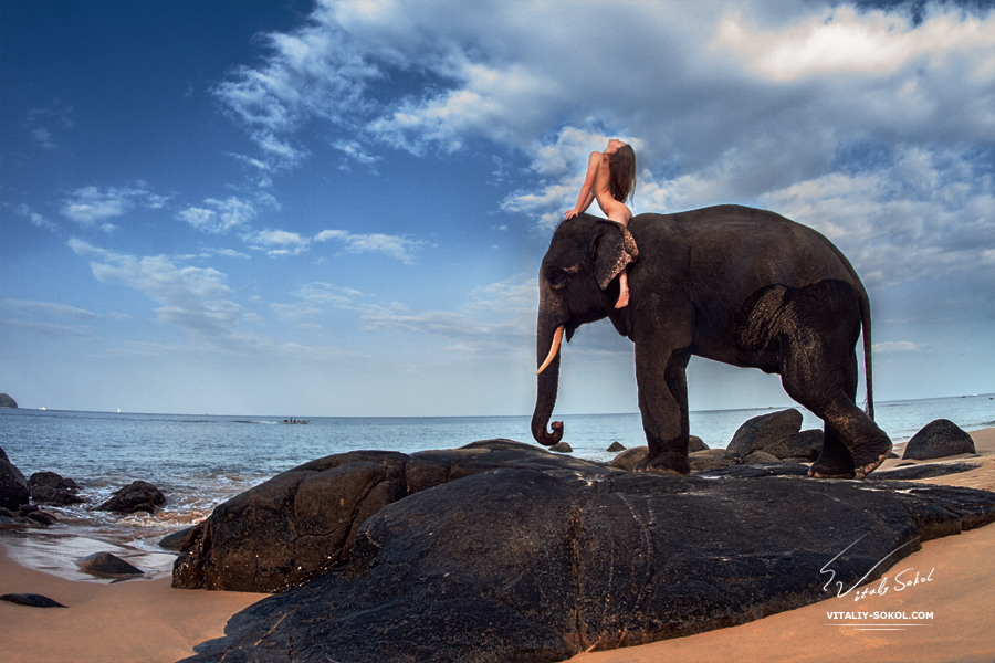 beauty nude wild. Elephant and model