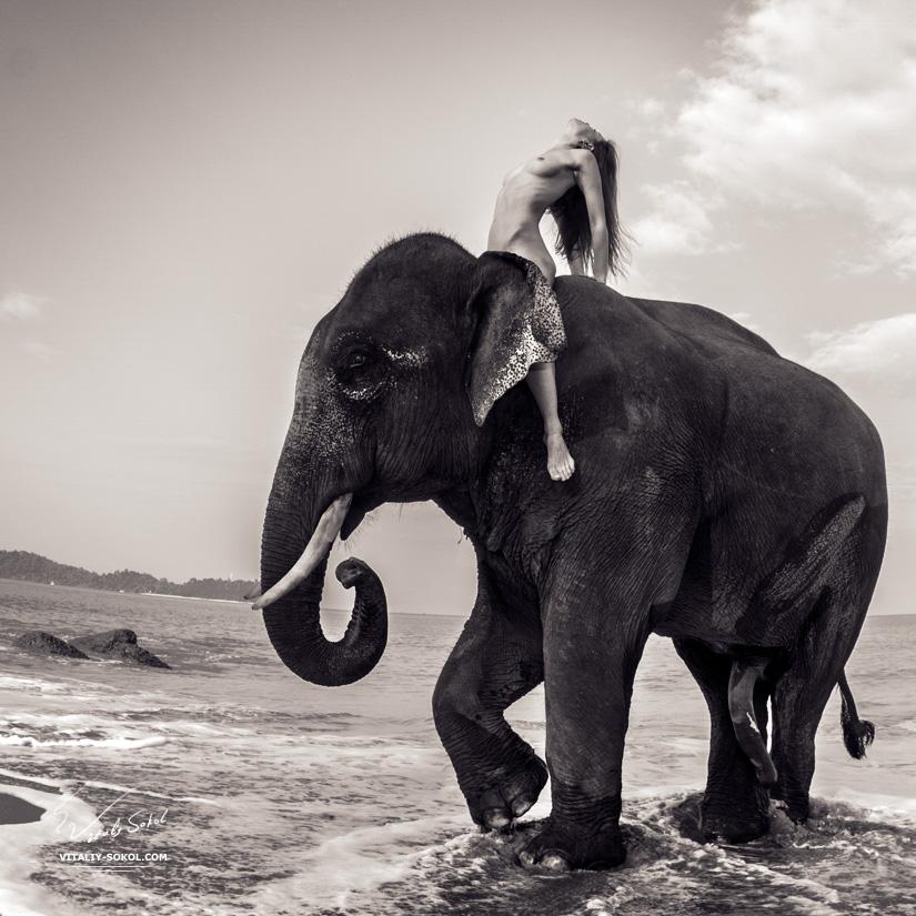Обнажённая девушка на слоне. На картинке присутствует огромный слоновый член