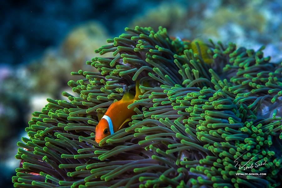Maldivian underwater life