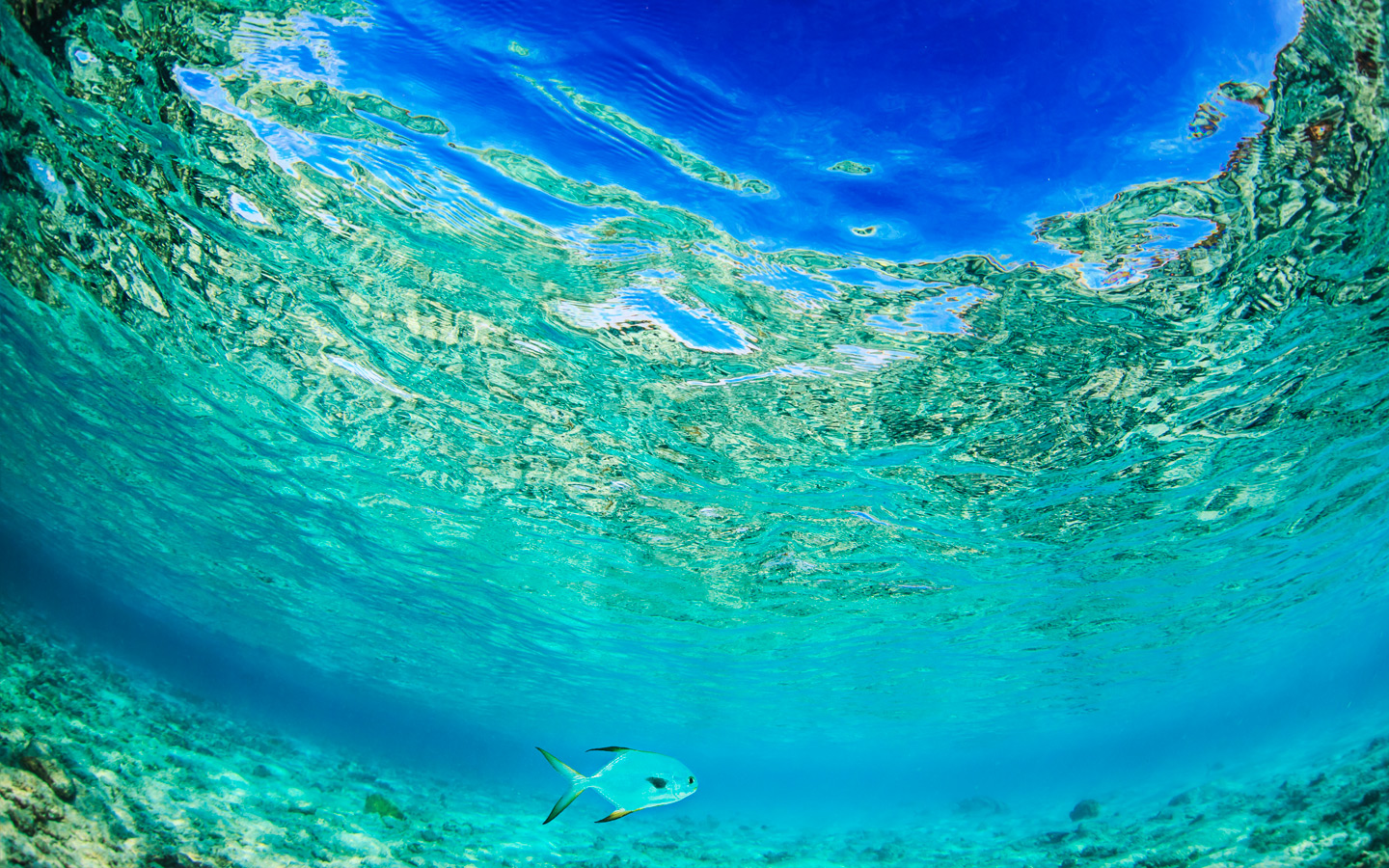 Ocean UnderWater surface with sandy bottom. Only fish in shallow water. Tropical Daylight through water.