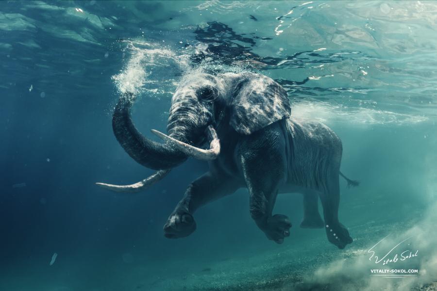 underwater-elephant-02