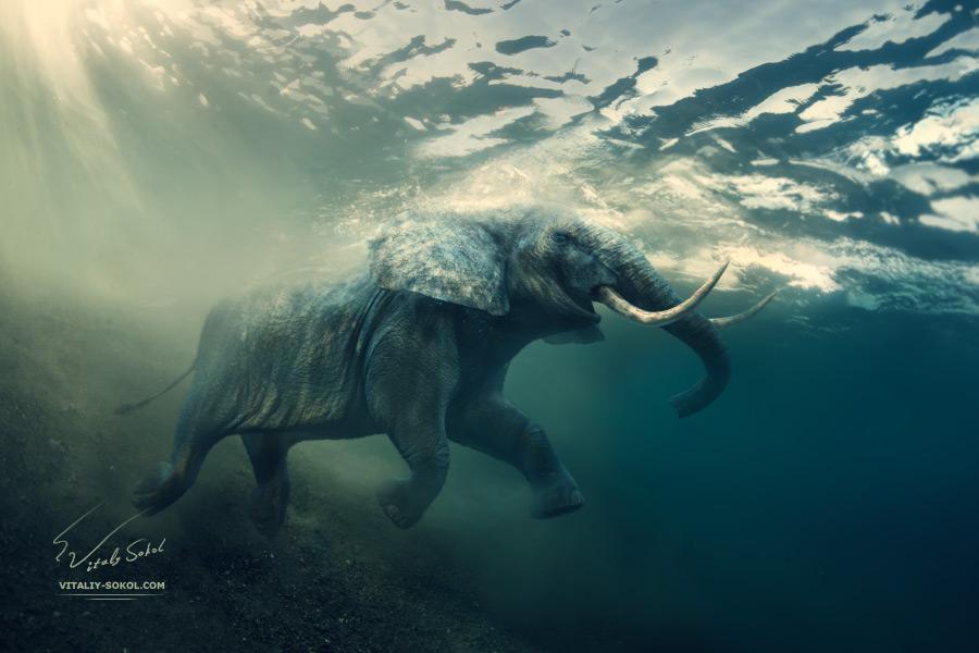 underwater-elephant